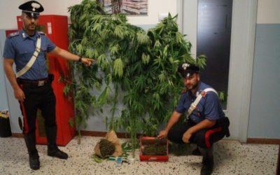 La difficile ricerca del cannabis club a Barcelona