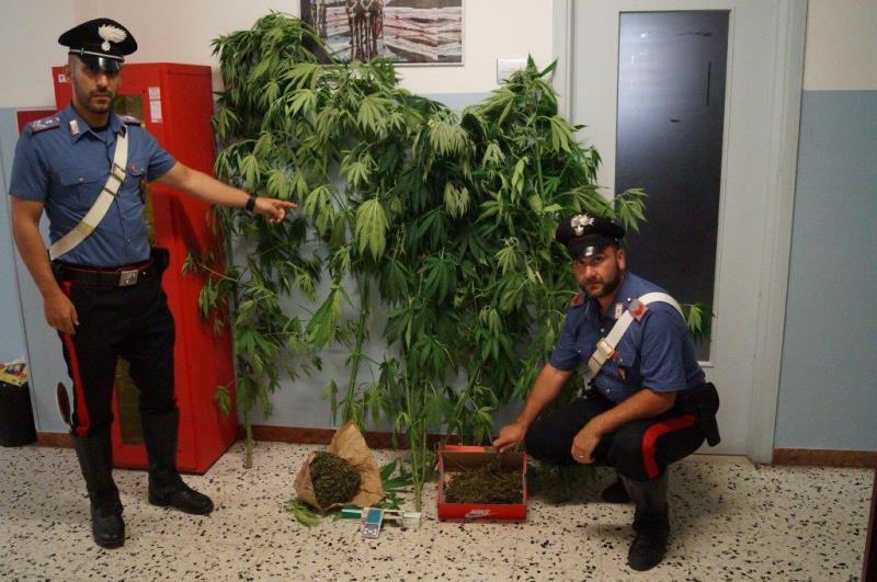 weedjam cannabis social club