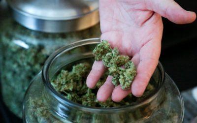 I medici Americani rivendicano il diritto sull'uso della cannabis terapeutica: