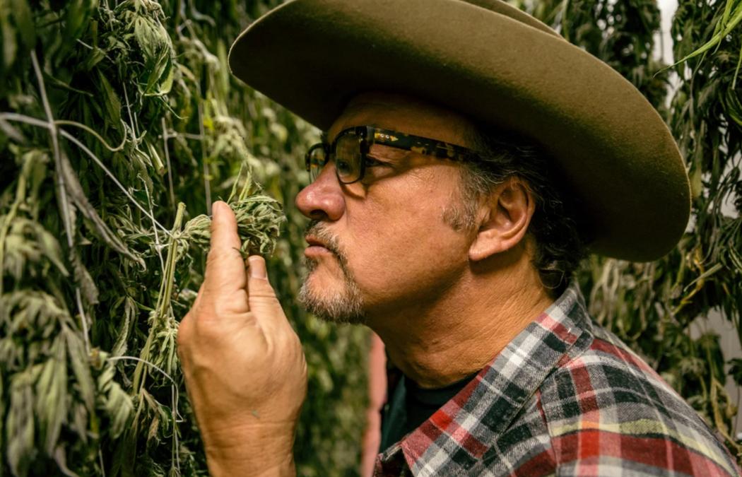 Business cannabis, Belushi e altri personaggi famosi diventano produttori