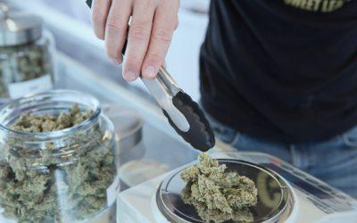 Filiera della cannabis, il nuovo business andrà in fumo?
