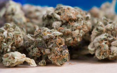 Qualità della marijuana, come controllarla